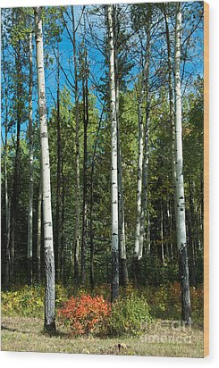 A Touch Of Autumn Wood Print by Bob and Nancy Kendrick