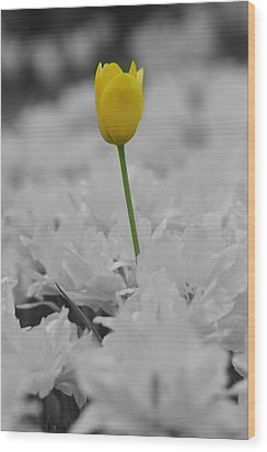Wood Print featuring the photograph A Touch Of Color by Renee Hardison