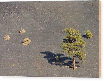 A Tough Neighborhood Wood Print by Mike  Dawson
