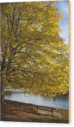 A Tree With Golden Leaves And A Park Wood Print by John Short