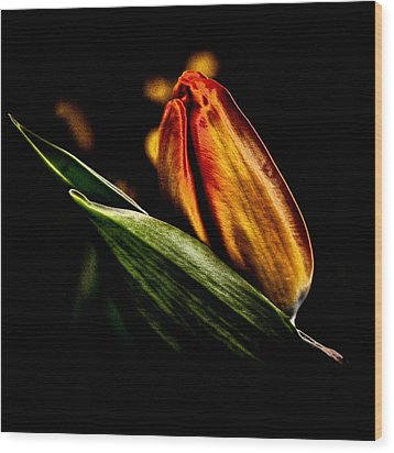 A Tulip With Sheen Wood Print by David Patterson