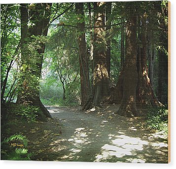 Wood Print featuring the photograph A Walk In The Forest by Margaret Buchanan