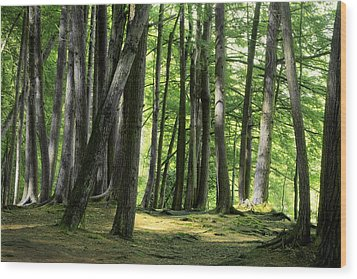 A Walk In The Forest Wood Print by Mike Flynn