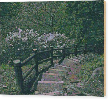 Wood Print featuring the photograph A Walk In The Park by Tim Ernst