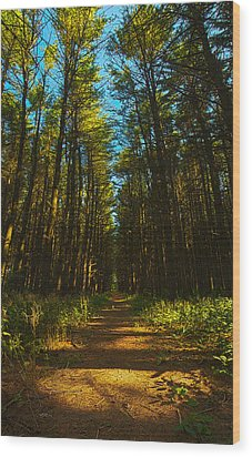 A Walk In The Pines Wood Print by Phil Koch