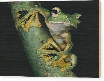 A Wallaces Flying Frog, Rhacophorus Wood Print by Tim Laman
