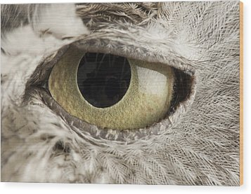 A Western Screech Owl Otus Kennicottii Wood Print by Joel Sartore
