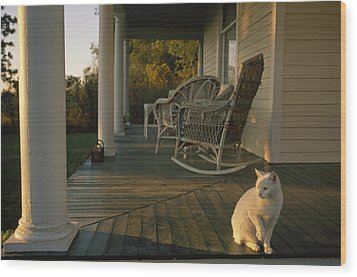A White Cat In Sunlight On A Columned Wood Print by Joel Sartore