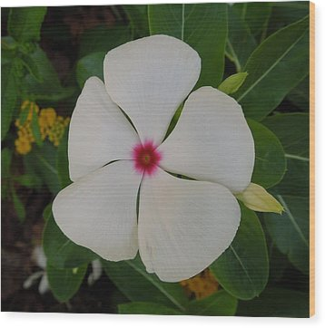 A White Star With A Red Center Wood Print by Chad and Stacey Hall
