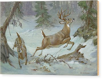 A White Tail Buck And Doe Flee Wood Print by Walter A. Weber