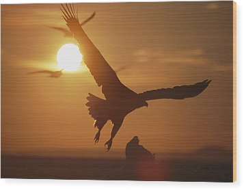 A White-tailed Eagle In Flight Wood Print by Tim Laman