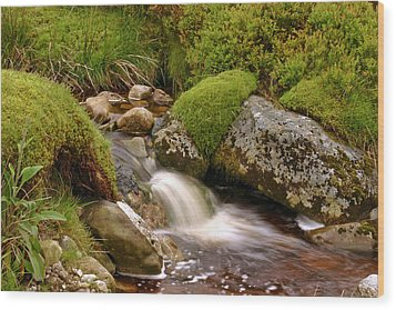 A Wicklow Stream Wood Print by Martina Fagan