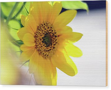 A Wish For Sunshine In Your Day Wood Print by Joanne Brown
