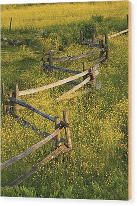 A Wooden Rail Fence Surrounded By Wood Print by David Chapman