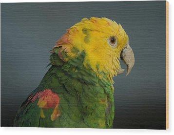 A Yellow-headed Amazon Parrots Amazona Wood Print by Joel Sartore