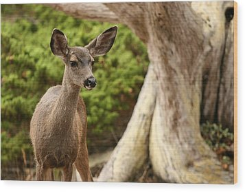 A Young Deer In A Grove Of Rare Wood Print by Charles Kogod