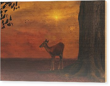 A Young Deer Wood Print by Tom York Images