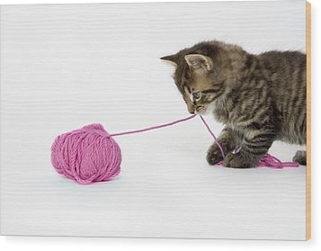 A Young Tabby Kitten Playing With A Ball Of Wool. Wood Print by Nicola Tree