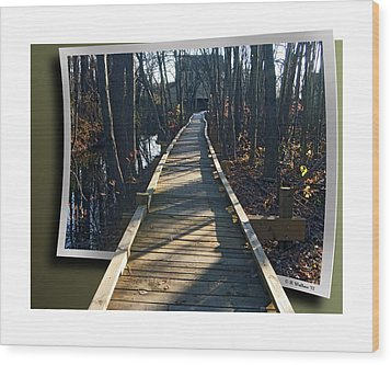 Abbotts Nature Trail Wood Print by Brian Wallace