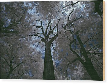 Wood Print featuring the photograph Above It All by Yvonne Emerson AKA RavenSoul