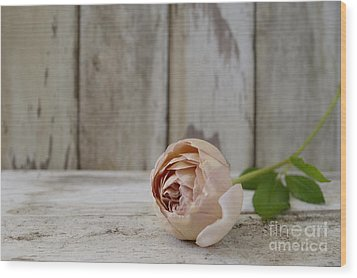 Abraham Darby Wood Print by Cindy Garber Iverson