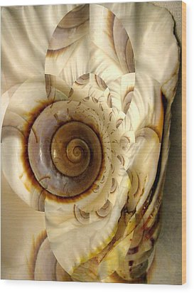 Abstract Seashell Wood Print by Shirley Sirois