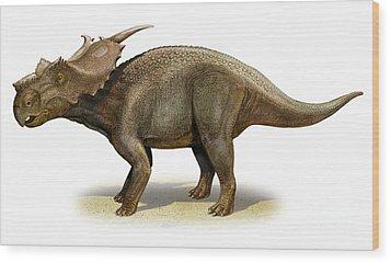Achelousaurus Horneri, A Prehistoric Wood Print by Sergey Krasovskiy