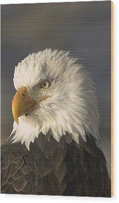 Adult Bald Eagle Wood Print by Michael S. Quinton