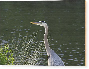 Wood Print featuring the photograph Adult Great Blue Heron by Brian Wright