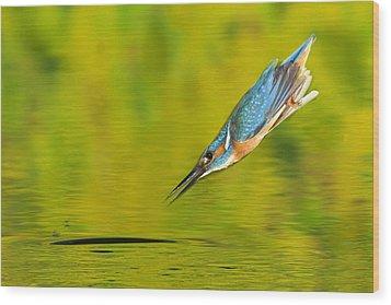 Adult Male Common Kingfisher, Alcedo Wood Print by Joe Petersburger
