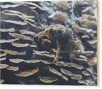Wood Print featuring the photograph Adventurous Toad 2 by Gerald Strine