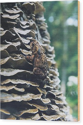 Wood Print featuring the photograph Adventurous Toad by Gerald Strine