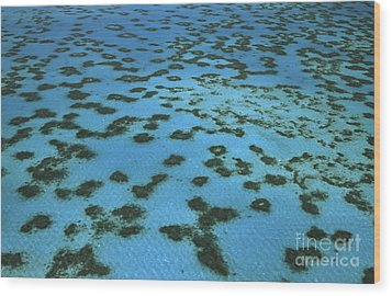 Aerial View Of Great Barrier Reef Wood Print by L Newman and A Flowers and Photo Researchers