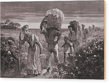 African Americans Leaving A Cotton Wood Print by Everett