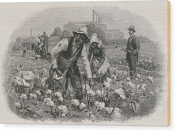 African Americans Pick Cotton Wood Print by Everett