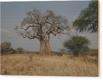 African Baobab Tree In The Tarangire Wood Print by Gina Martin