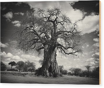 African Baobabs Tree Wood Print by Jess Easter
