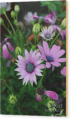 Wood Print featuring the photograph African Daisy by Eva Kaufman