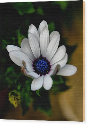Wood Print featuring the photograph African Daisy by Lynne Jenkins