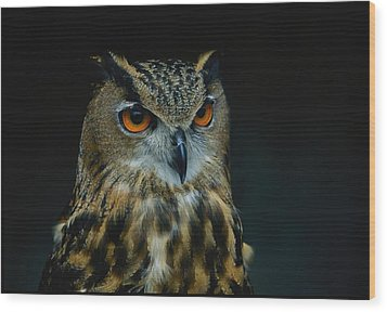 African Eagle Owls Are Among The 200 Wood Print by Joel Sartore