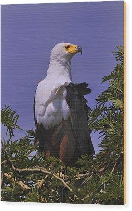 African Fish Eagle Wood Print by Richard Matthews