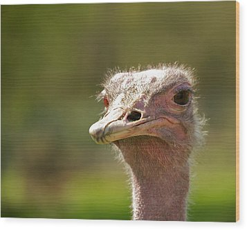 African Ostrich Wood Print by Ivan SABO