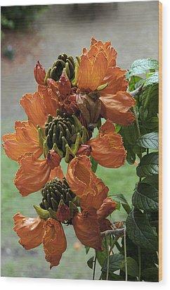 African Tulip Wood Print