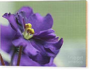 Wood Print featuring the photograph African Violet by Denise Pohl