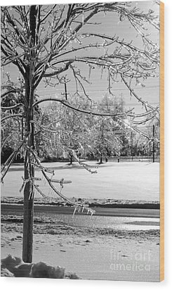 After The Ice Storm Wood Print by Lila Fisher-Wenzel