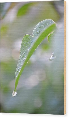 Wood Print featuring the photograph After The Rain by JD Grimes