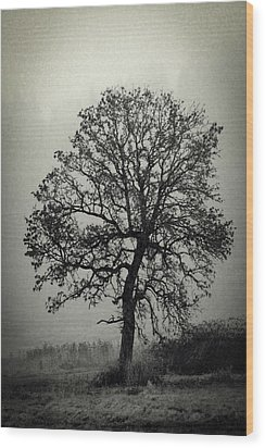 Wood Print featuring the photograph Age Old Tree by Steve McKinzie