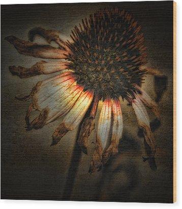 Ageless Beauty Wood Print by Bonnie Bruno