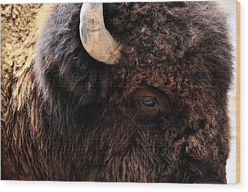Wood Print featuring the photograph Ageless Bison Of Yellowstone by Yeates Photography
