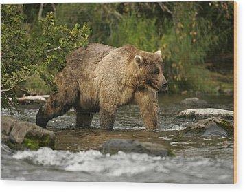 Alaskan Brown Bear Ursus Arctos Walking Wood Print by Roy Toft
